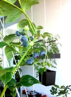 Hanging garden : Oatmeal Studio