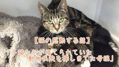 【1分涙腺崩壊】子猫たちが捨てられていた動物病院を探し当てた母猫【恋人の感動する話】  ニュージーランド北部、ファンガレイにある ミルロード動物病院で働いているスタッフは、10月14日の朝、いつものように病院に向かうと驚くべきものを発見した。 小さな子猫4匹が箱に入った状態で玄関前に置かれていたのだ。   ☆☆☆☆☆☆ 涙腺崩壊-1分で感動!では、 泣ける話、感動する話を 厳選して配信しています。   音と画像で心震える感動を…。  チャンネル登録すると 新しい動画がスグに見れます☆ ▼▼▼ http://www.youtube.com/subscription_center?add_user=namidaafureru