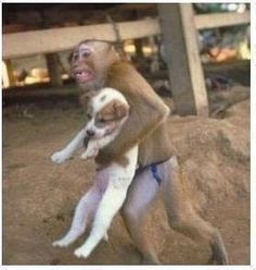 If a monkey can be so compassionate, what does that say about our capability?
