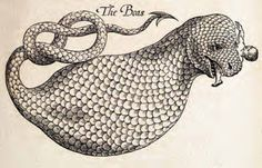 The Boas Edward Topsell - The History of Four-Footed Beasts and Serpents (1658)