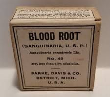 Image result for blood root root