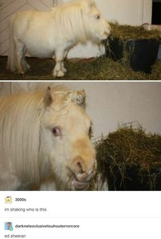 im generally a nice person but that horse is fuckin ugly Animals And Pets, Funny Animals, Cute Animals, Dankest Memes, Funny Memes, Hilarious, Animal Memes, Tumblr Funny, Funny Posts