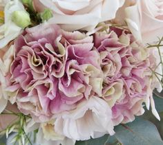 Florissimo - Flowers for weddings and events in Shropshire. CARNATION, ALL YEAR. From Florissimo Flower Directory at https://uk.pinterest.com/ByFlorissimo/flower-directory/ | Most colours, not blue