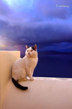 Santorini Greece Cat ~ by Penny Wang