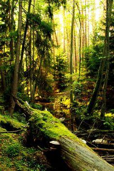 Bory Tucholskie, Poland #travel #budget #free @ itsoneworldtravel.com