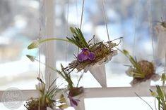 Fensterdeko fuer den Fruehling - aus Eierkartons und ...