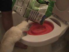 Tanné de changer la litière ? Voyez comment entraîner minet à utiliser la toilette ! - Trucs et Astuces - Trucs et Bricolages