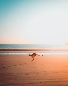 Life in the desert, in the city, different cultures. You will be seduced by all the faces of Australia! Perth, Brisbane, Melbourne, Australia Day, Queensland Australia, Western Australia, Australia Travel, Vacation Places, Places To Travel
