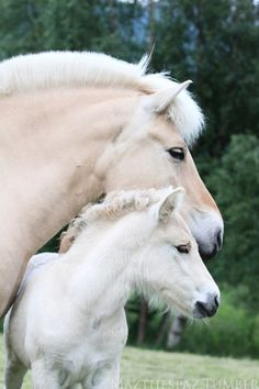 Horse and pony saddle classifieds from dealers and manufacturers. Most Beautiful Horses, All The Pretty Horses, Animals Beautiful, Baby Horses, Draft Horses, Animals And Pets, Baby Animals, Cute Animals, Fjord Horse