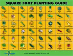 Alternative Gardning: Square Foot Planting Guide
