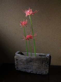 Red spider lily (Ikebana)