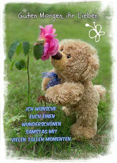 Good Morning, Teddy Bear, Humor, Animals, Collage, Vintage, Hapy Day, Good Day, Funny Pics