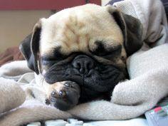 thingsiheardtoday:  My baby taking a nap