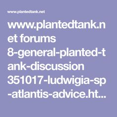 The Planted Tank Forum Bubble Buddy, Atlantis, Give It To Me, Bubbles, Advice, Aquascaping, Tips