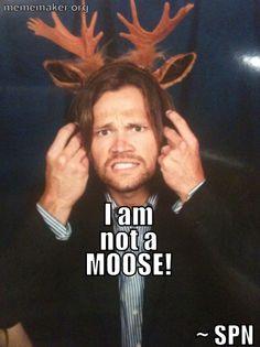 I am not a MOOSE! #Supernatural