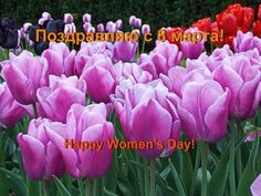 ПОЗДРАВЛЯЮ с 8 МАРТА! Happy Women's Day!