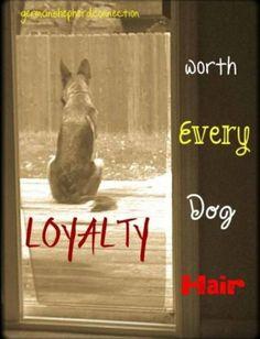 Loyalty worth every dog hair