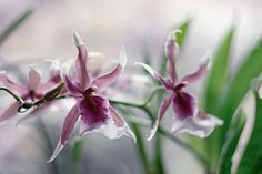Orchids by /\ \/\ /\/ /\, via Flickr