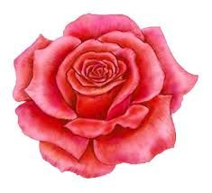 Résultats de recherche d'images pour « rose »