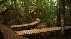 Enchanted forest cabins