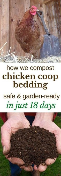 Here's how we turn the deep litter from our chicken coop into safe, garden-ready compost, in just 18 days. #gardening #compost #chickens #backyardchickens #composting #permaculture