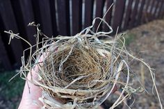 The wild bird nest I found got me thinking about the birds we've domesticated. Is there really any fundamental difference between them?