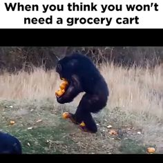 I've done it and hope I was half as amusing as this chimp :D Funny Animal Memes, Funny Animal Videos, Cute Funny Animals, Funny Animal Pictures, Funny Cute, Haha Funny, Funny Shit, Funny Memes, Funny Work