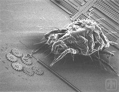 MEMS devices are essentially tiny machines which act the same as full size devices, but are often only microns wide.