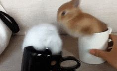 This bunny trying vigorously to escape from this tiny coffee cup.