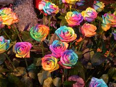 tie-dye roses - achieved by injecting color dye into the stems during growth