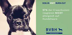 http://bv-bürohund.de/wp-content/uploads/2016/02/b%C3%BCrohund-allergie_.png