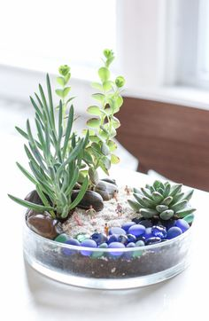 Beach Bum Terrarium - a unique and quirky tabletop garden DIY made with succulents and other unique elements to look like a mini beach. Garden Planters, Succulents Garden, Planting Flowers, Indoor Plant Pots, Indoor Garden, Pot Plants, Plants In Glass Bowl, Grilling Gifts, Quirky Home Decor