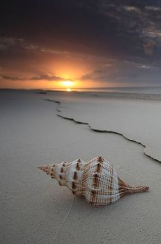 .Now the shell await the night as the day tail away. Copy by Deborah A. White