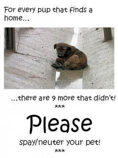 Please spay & neuter your pets....