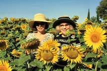 Vacation Apartments, Tuscany, Make Me Smile, Cowboy Hats, My Favorite Things, Garden, Pretty, Holiday, Sunflowers