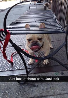 Funny Pictures For Today (#99)