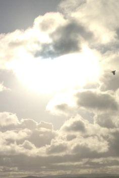 A bird in flight over Lake Macquarie
