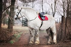 Big Horses, Work Horses, Horse Drawings, Clydesdale, Draft Horses, Photo Heart, Gentle Giant, Horse Art, Zebras