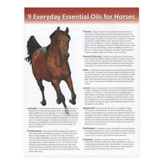 4083 - Tear Pad: 9 Everyday Essential Oils for Horses (50 Sheets)