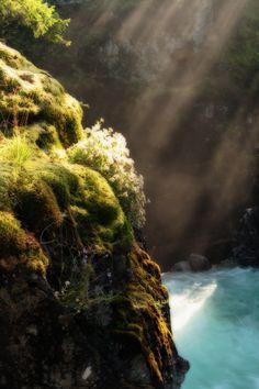 Morning Warmth by Stickman on Panoramio.com - at Little Qualicum Falls Provincial Park near Qualicum Beach (Vancouver Island)