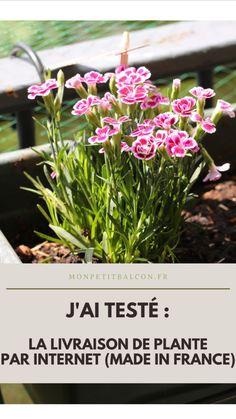 #jardinage #fleurs #rose #stayinspired vive le végétal Peach Party, Plantation, Plants, Pink, Gardening, Pink Blossom, Horta Vertical, Small Bouquet, Veggie Gardens
