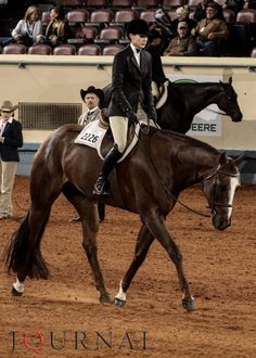 AQHA Professional Horseman Stacy Huls rides Blended Chocolate to win senior hunter under saddle at the 2012 AQHA World Show. Read full story: http://www.aqha.com/Showing/World-Show/Classes/Open-English/Senior-Hunter-Under-Saddle.aspx