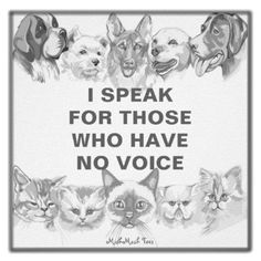 Animal Welfare - be a part of it!