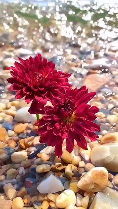Wallpaper Nature Flowers, Beautiful Landscape Wallpaper, Flowers Gif, Flower Wallpaper, Cute Love Wallpapers, Beautiful Flowers Wallpapers, Beautiful Rose Flowers, Amazing Flowers, Beautiful Nature Pictures