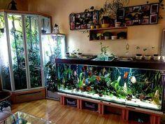 10 Tips on Designing a Freshwater Nature Aquarium Diskus Aquarium, Aquarium Stand, Nature Aquarium, Aquarium Design, Planted Aquarium, Aquariums, Terrariums, Betta, Fish Tank Themes