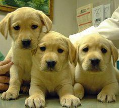 20 REASONS TO WORK IN AN ANIMAL HOSPITAL   Kingston Animal Hospital November 2013
