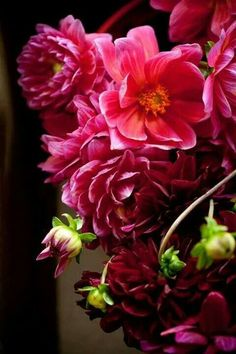 Lucious Red Petals