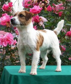 JRT --- show quality