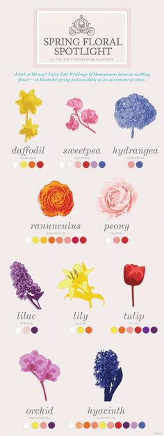 Spring Floral Spotlight flower chart to give an idea of what flowers are in bloom for the Spring Season from BanquetEvent.com Lucky in Love Wedding Planning Blog