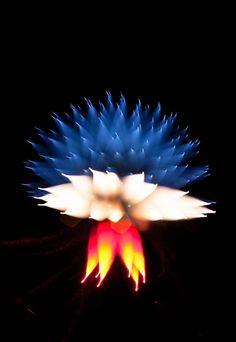 La photographie en exposition longue de feux d'artifice